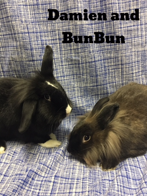 Damien and Bun Bun