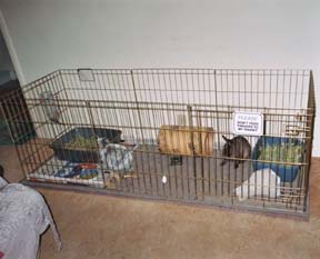 an exercise pen set up for 2 bunnies